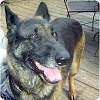 Adopt A Pet :: Lady - Pike Road, AL