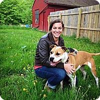 Adopt A Pet :: Dream - Grafton, OH