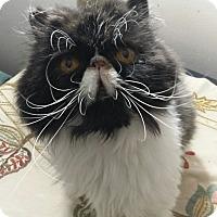 Adopt A Pet :: Blue Bell - Columbus, OH