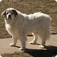 Adopt A Pet :: Mac SPONSORED - Bloomington, IL