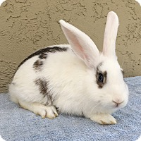 Adopt A Pet :: Teddy - Bonita, CA