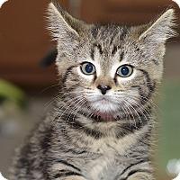 Adopt A Pet :: Rita - Medina, OH