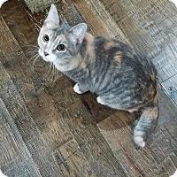 Adopt A Pet :: Garcia - Edmond, OK