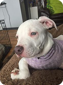 Mixed Breed (Medium) Mix Puppy for adoption in Flushing, Michigan - Chloe