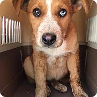 Adopt A Pet :: Tucker - Cashiers, NC