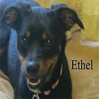 Adopt A Pet :: Ethel - Warren, PA