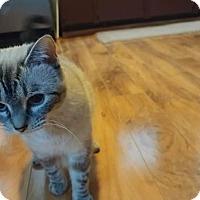 Adopt A Pet :: Sheba - Pittstown, NJ