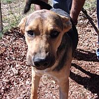 Adopt A Pet :: Roscoe - Arenas Valley, NM