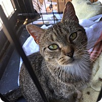 Adopt A Pet :: Mary - Naugatuck, CT