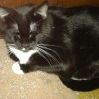 Adopt A Pet :: Liz - Bloomingdale, IL