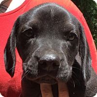 Adopt A Pet :: Mich#1M - Orlando, FL