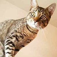 Adopt A Pet :: Einstein - Davis, CA