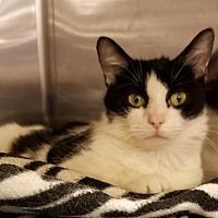 Adopt A Pet :: Olivia - Columbus, OH