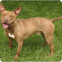 Adopt A Pet :: Freddy - Chicago, IL