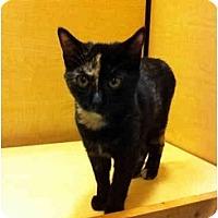 Adopt A Pet :: Millie - Farmingdale, NY