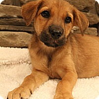 Adopt A Pet :: Java - Wytheville, VA