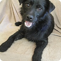 Adopt A Pet :: Kirby - Wytheville, VA