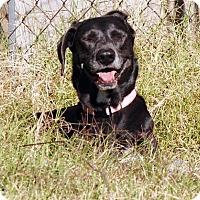 Adopt A Pet :: Lilibell (see me on facebook!) - Chandler, AZ