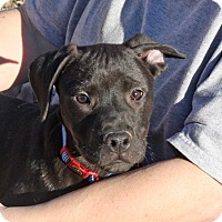 Adopt A Pet :: Sid - PENDING, in Maine - kennebunkport, ME