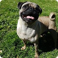 Adopt A Pet :: Frosty - Crump, TN