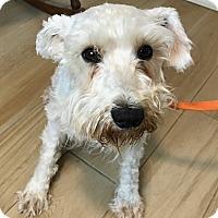 Adopt A Pet :: Bette - Redondo Beach, CA