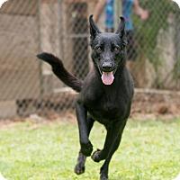 Adopt A Pet :: Naga - Key Biscayne, FL