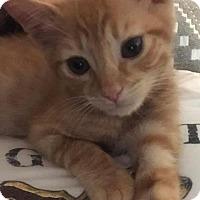 Adopt A Pet :: Kenickie - Chandler, AZ