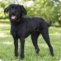 Adopt A Pet :: Ohana - Ile-Perrot, QC