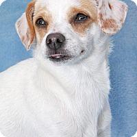 Adopt A Pet :: Mae Mae - Encinitas, CA