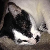 Adopt A Pet :: Slylar - Cypress, TX