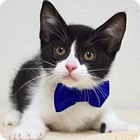 Adopt A Pet :: Sam - Dublin, CA