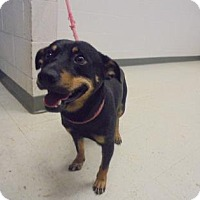 Adopt A Pet :: Cannon - Lonely Heart - Gulfport, MS