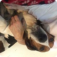 Adopt A Pet :: Charlie - Bakersville, NC