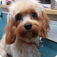 Adopt A Pet :: Josie - Crump, TN