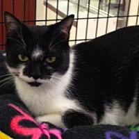 Adopt A Pet :: Ro - Alexandria, VA