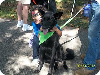 German Shepherd Dog Dog for adoption in Greeneville, Tennessee - Teddy