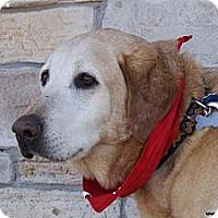 Adopt A Pet :: George Bob - Newcastle, OK