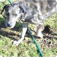 Adopt A Pet :: Harmony - Glastonbury, CT