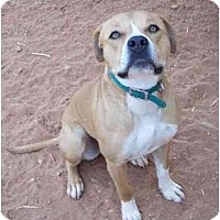 Adopt A Pet :: Gator - Sierra Vista, AZ