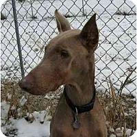 Adopt A Pet :: Sako--adopted!! - New Richmond, OH