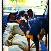 Adopt A Pet :: Jewel - Huntington Beach, CA