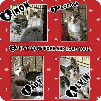 Calico Kitten for adoption in Pompano Beach, Florida - Theodore