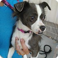 Adopt A Pet :: Aberdeen - Meridian, ID