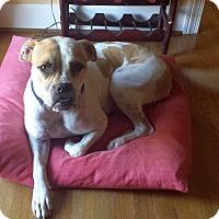 Adopt A Pet :: Piper - Alpharetta, GA