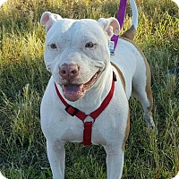 Adopt A Pet :: Destiny - Ft. Myers, FL