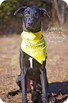 Labrador Retriever/German Shepherd Dog Mix Dog for adoption in Fort Valley, Georgia - Mowgli