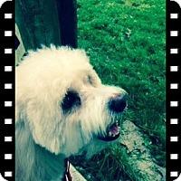 Adopt A Pet :: Adopted!! Rio - OH - Tulsa, OK
