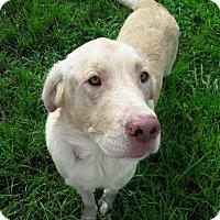 Adopt A Pet :: Basil - New Canaan, CT