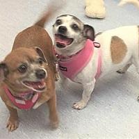 Adopt A Pet :: Polly Anne - San Francisco, CA