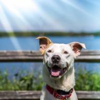 Adopt A Pet :: Liam - Round Lake Beach, IL